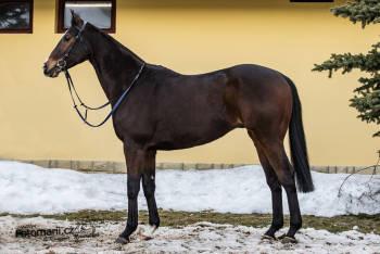 Mustamir (IRE)