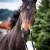 Vítězství z ceně trojročných kobýl na Slovensku