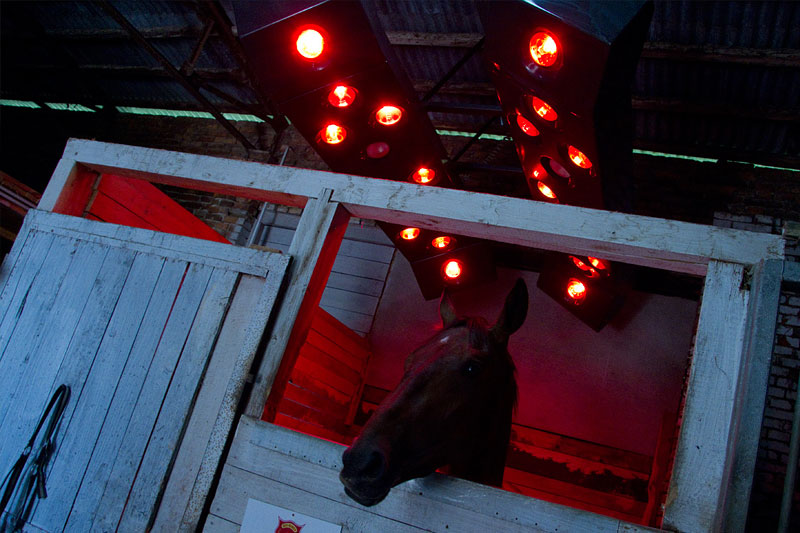 """Koňské """"solarium"""""""