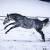 Fotogalerie: Koně ve výběhu